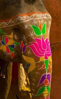 elefante amber