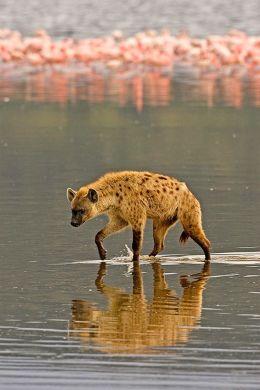 hienanakuru