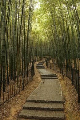 bamboo forest hangzhou
