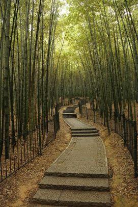 bamboo forest hangzhou