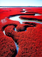 red beach china